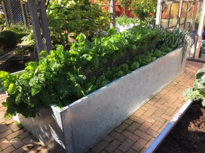 galvanised-raised-beds-NCvB.jpg